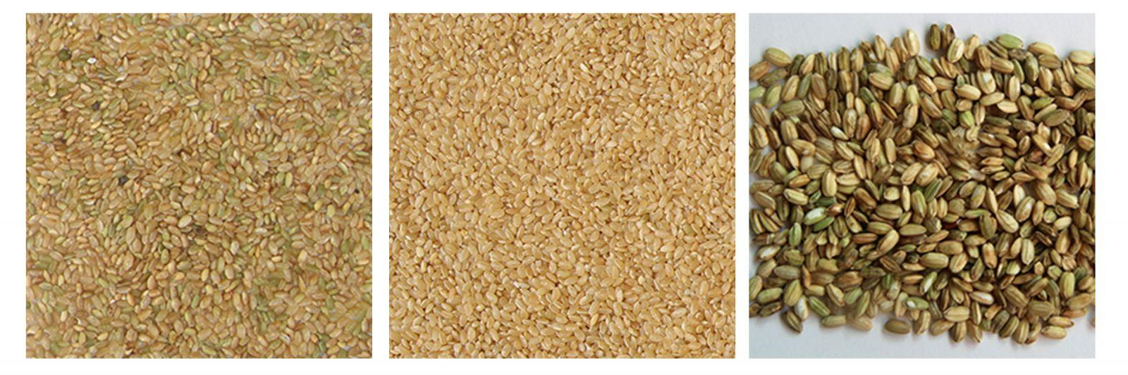 Chế độ tách gạo thông minh